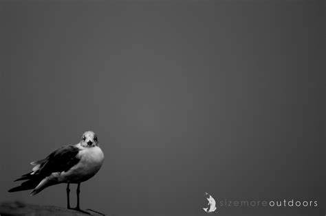 image result for balance photography definition design the principles of design in photography trent sizemore