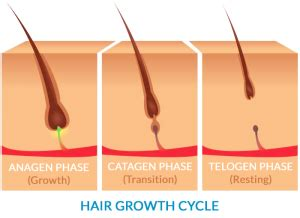 Hair Shedding Cycle by Abuse Of Laughing Gas Nitrous Oxide Can Cause Hair Loss