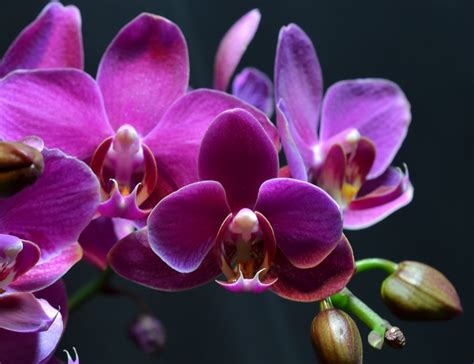 pink orchids blooming time lapse youtube