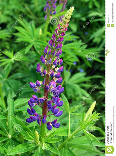 imagenes de flores azules brillantes flores azules brillantes imagenes de archivo imagen