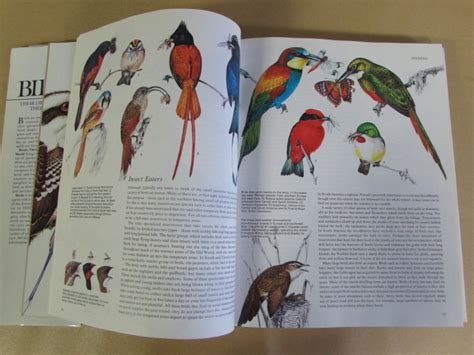 bird coffee table book lot detail all about birds vintage audubon society field