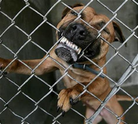 vicious propensities dog owners liability