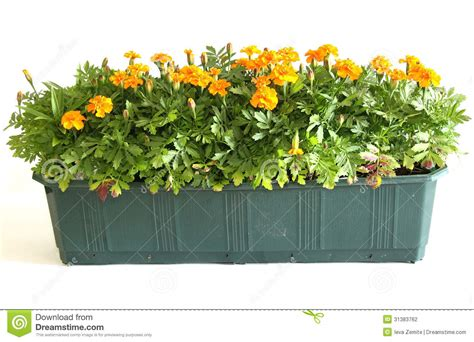 Balcony Window Box by Window Box Stock Photography Image 31383762