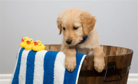can you bathe a 6 week puppy 10 ways to a happy healthy pet