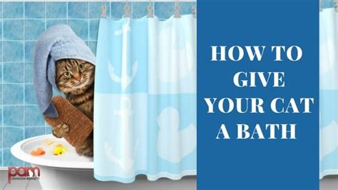 how to give a a bath how to give your cat a bath cat behavior associates pam johnson