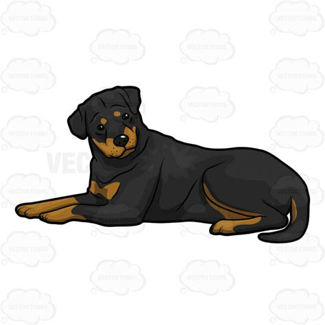 rottweiler clipart attentive big relaxing on the floor clipart vector