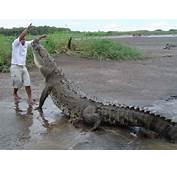 Magazine Wallpaper Biggest Crocodile Saltwater &amp Club