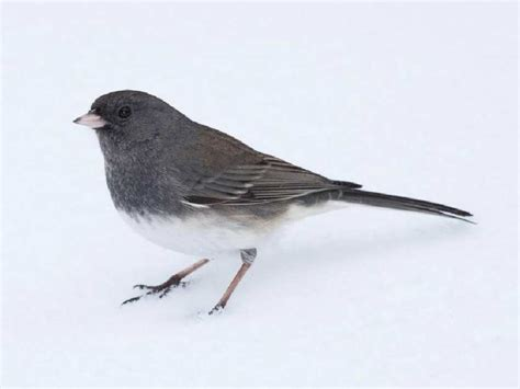 top 28 ontario winter birds ontario birds and herps