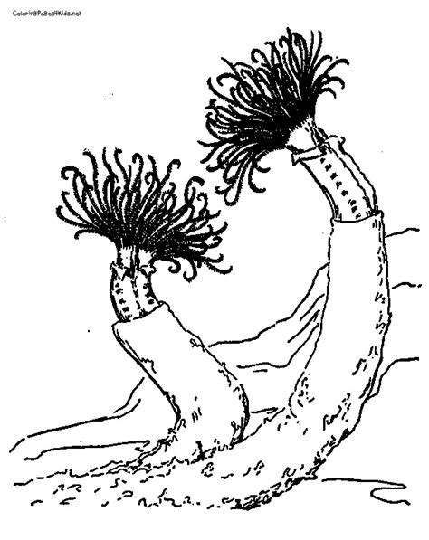 underwater plants coloring pages 12 images of ocean plankton coloring page zooplankton