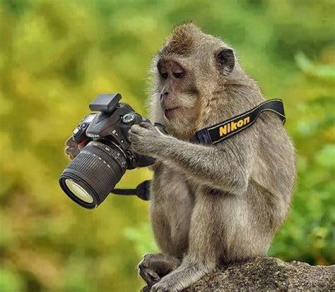 funny photographers photos photo flare new york