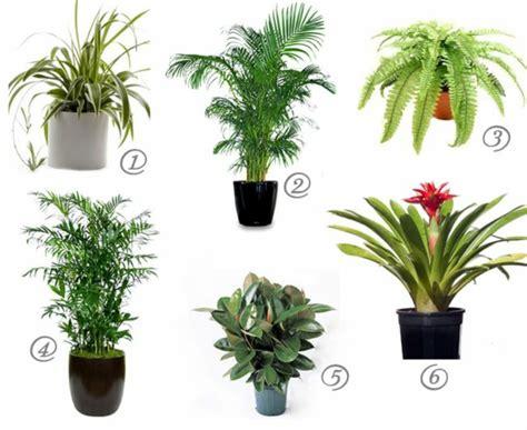 good house plant tipps f 252 r die richtige pflege der goldfruchtpalme