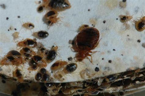 best bed bug fogger bed bug spray on skin