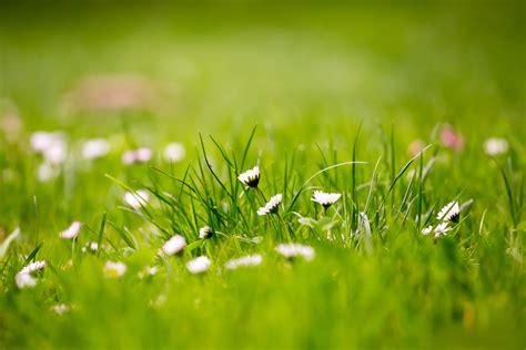 wallpaper grass flower 12 beautiful green grass field hd wallpapers