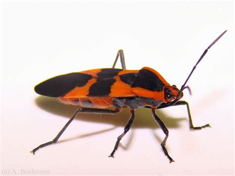 bug three insects bugs facts insects and bugs world