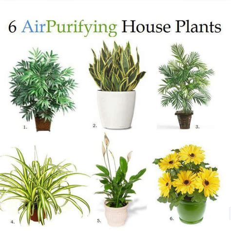 plants   good   air filters