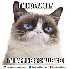 hairless cat meme hairless cat memes www pixshark images