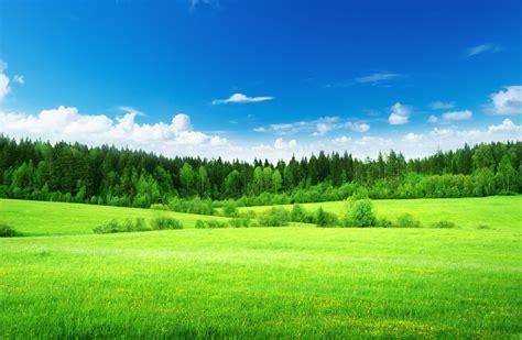 green light tree nature the field grass green light green forest tree sky