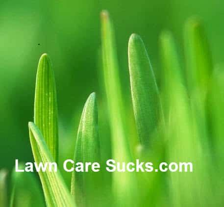 starting your lawn care or landscaping business