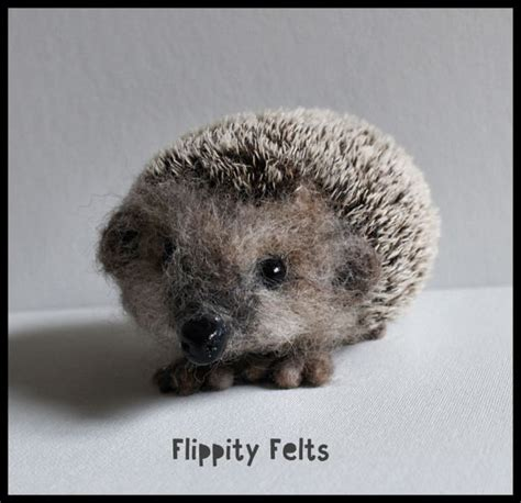 hedgehog for sale 25 best ideas about hedgehog for sale on pinterest baby