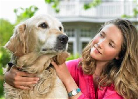 how to take care of puppies how to take care of dogs understanding responsibilities kanineklub