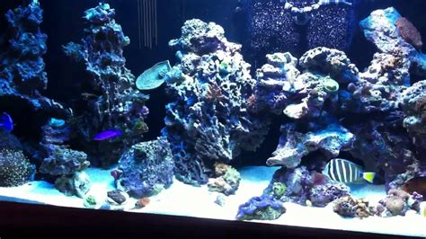 saltwater aquarium aquascape rockscape or aquascaping on 240 gallon reef aquarium youtube