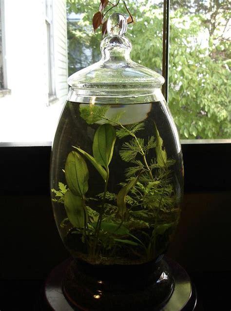 glass jar water garden indoor water garden succulents