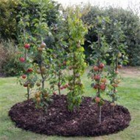 94 fruit that doesn t grow on trees productive garden on a small lot vegetablegardener