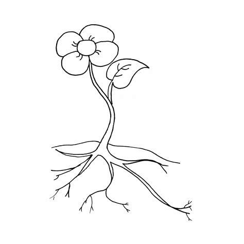 imagenes de animales y plantas para colorear plantas para colorear pintar e imprimir