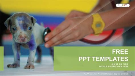 powerpoint templates for veterinarians veterinarian checking up sick dog with stethoscope in vet