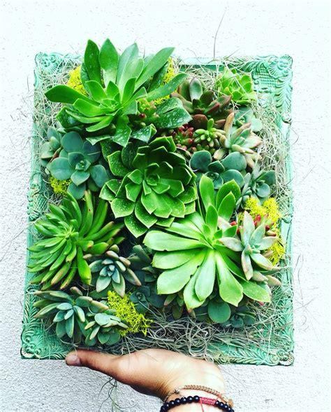 best 25 succulent frame ideas on vertical