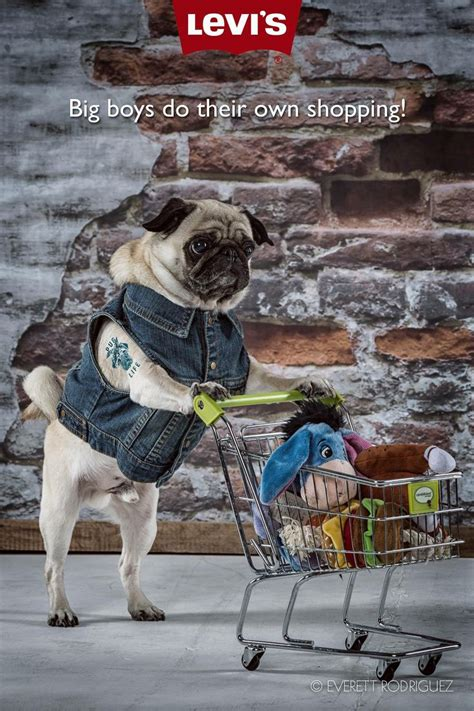 pug shopping 17 best images about pug and things on facts and shopping