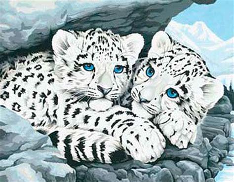 Blau Grün Graue Augen 4952 by Schneeleoparden Babys Kaufen Bei Kreativ Offensive De