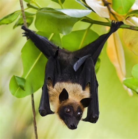 a fruit bat opinions on fruit bat