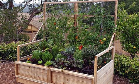 planning a vegetable garden for beginners vegetable garden planning for beginners olt