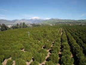 Used California Orange Grove Orange Grove In Redlands California I Used