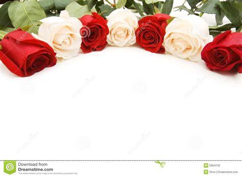 imagenes de flores rojas y blancas rosas blancas y rojas aisladas en el blanco foto de