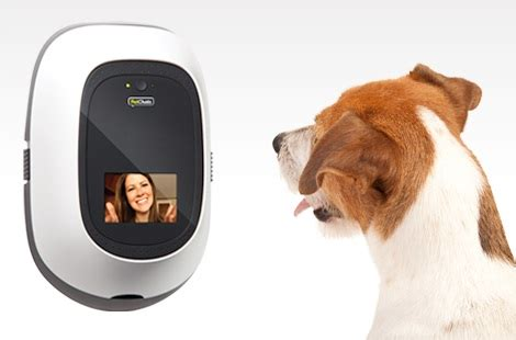 pet technologies technology is catching up with dog lovers