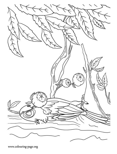 amazon rainforest coloring pages coloring home