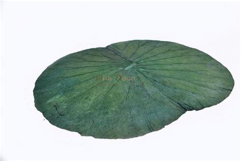 Smart Herb Garden feuille de nenuphar stabilisee x1