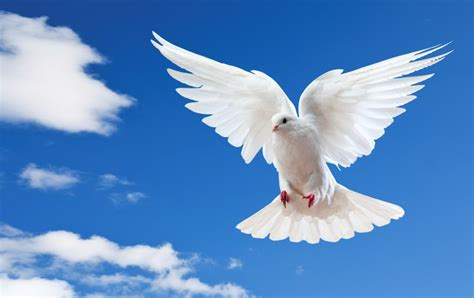 The Holy Spirit communion with the holy spirit 166 teaching by david