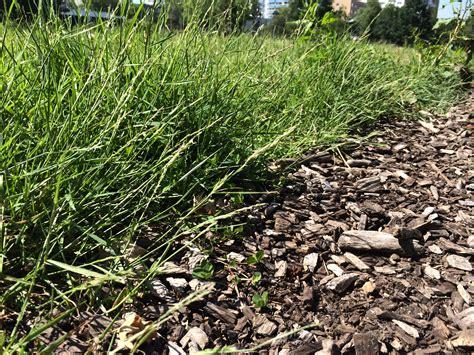Unkraut Auf Dem Rasen 6790 by Allgemein Rasen Experte