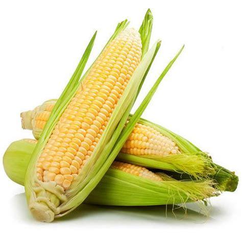corn loose (each) | harris farm markets