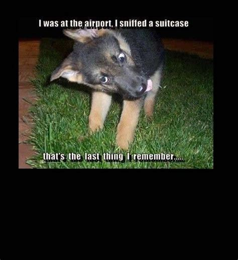 Derp Dog Meme - airport drugs derp dog derp pinterest puppys lol