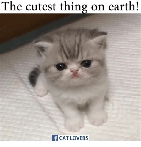 the cutest the cutest thing on earth if cat meme on sizzle