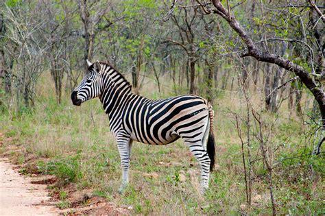imagenes animales salvajes africa banco de im 225 genes para ver disfrutar y compartir 8