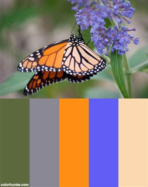 monarch color monarch butterfly color scheme paletas de colores