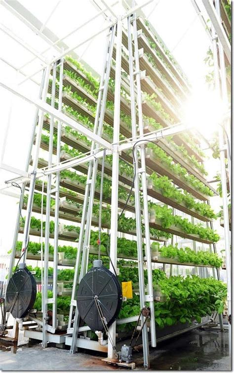 vertical farming singapore s solution to feed the local