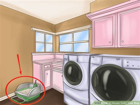 house training a dog in an apartment 3 easy ways to house train your dog with pictures