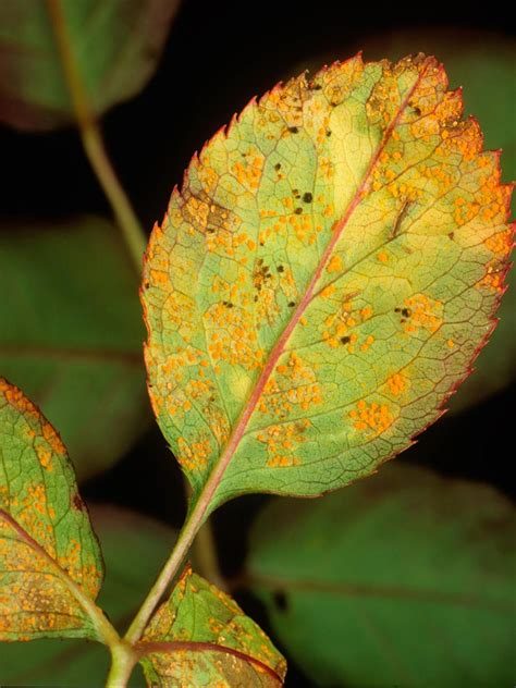 what are plant diseases common plant diseases types of plant diseases hgtv