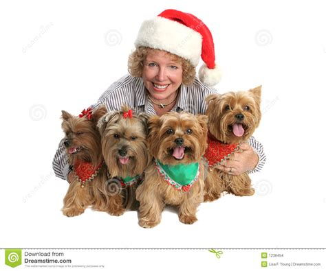 are yorkies family dogs yorkie family portrait stock images image 1238454